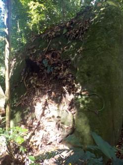 Termiten- oder Ameisennest? Keine Ahnung.