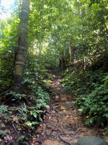 Nach ca 100m ist der Weg naturbelassen