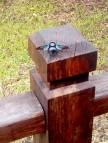 Fetter Brummer: Viele dieser fetten Insekten umfliegen das Forest Hostel
