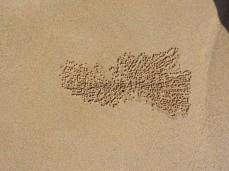 Beim Buddeln im Sand hinterlassen Geisterkrabben viele kleine Sandkugeln