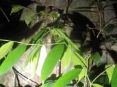 Skurilles Insekt: Ein Hundertfüßer