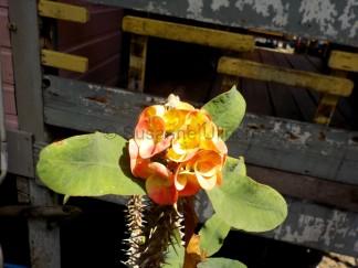 Wie immer entdecke ich zauberhafte Blumen