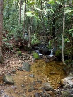 Sieht sehr erfrischend aus: kleiner Fluss im Wald