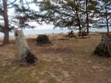 Wo einst die tollen Palmen standen, liegen jetzt nur noch Stammreste