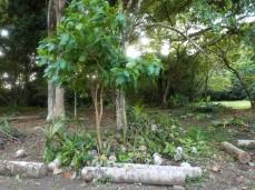 Diese Nachwuchs-Palmen werden bald eingepflanzt
