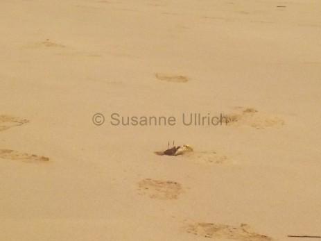 Gerade noch erwischt: eine der Krabben am Strand bevor sie in ihrem Loch verschwindet