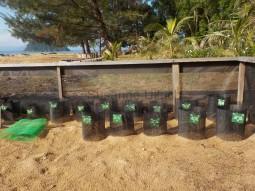 Hier sind die Schildkröteneier untergebracht und der Nachwuchs kann in Ruhe wachsen und schlüpfen