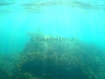 Sieht nach einem geheimnisvollen Unterwasserwald aus, sind aber nur Algen