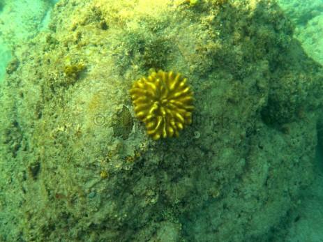 Eine der bunteren Korallen, die ich sah