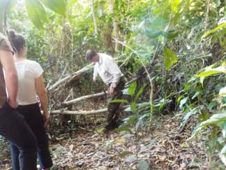 Howard zeigt uns was der Regenwald zu bieten hat