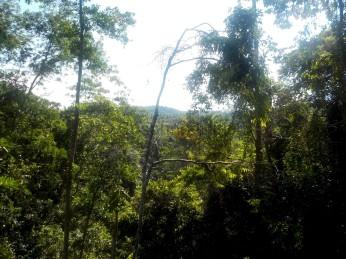 Blick vom Canopy-Walkway in den Regenwald