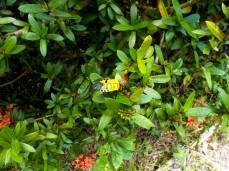 Hier ist der kleine Face Bug