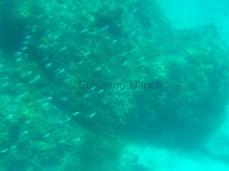 Viele kleine Fische