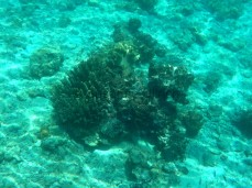 Korallen in unterschiedlichen Formen