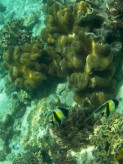 Halfterfische