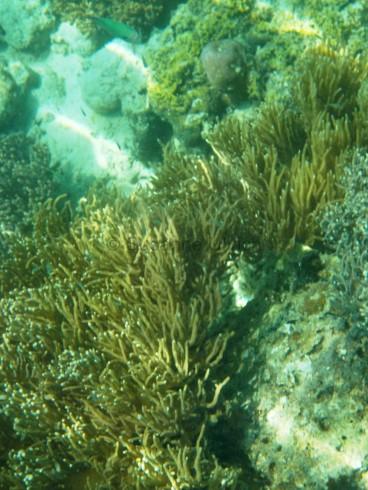 Bei der Identifizierung von Korallen bin ich nicht so weit gekommen