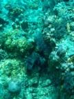 Hier weiß ich leider nicht was für eine Pflanze oder Koralle das ist