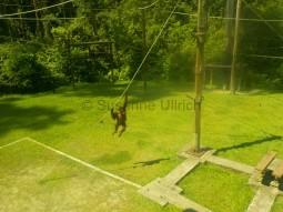 Kletterfreudige junge Affen im Nachwuchsbereich