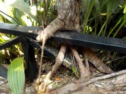 Natur frisst Geländer