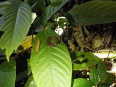 Eine kleine Schlange