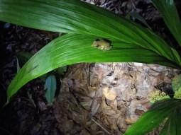 So ein hübscher kleiner Frosch