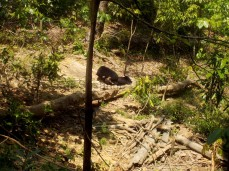 Morgendliches Spielen bei den Malaienbären