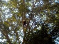 Der Nachwuchs klettert fast unsichtbar auf der rechten Seite des Baumes. Könnt Ihr ihn finden?