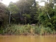 Die Elefanten-Gruppe besteht aus 10-15 Tieren mit vielen jungen Elefanten