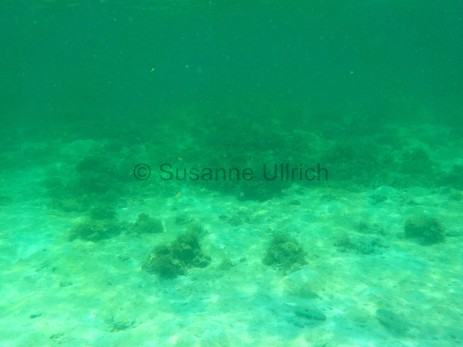 Blick auf eines der intakten Riffe vor Sapi