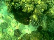Einer der vielen Anemonenfische