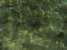 Komische Wasserpflanze vor Mamutik