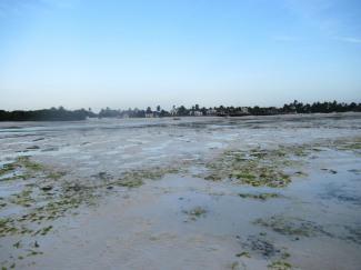 Blick auf den Strand vom Jambiani