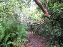 Im Jozani Forest
