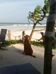 Verträumter Blick aufs Meer vom Hotelhund