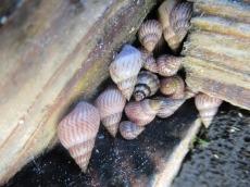 In den Ritzen der Treppe sammeln sich diese winzigen hübschen Muscheln