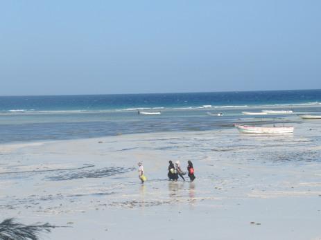 Einheimische Frauen gehen zur täglichen Austern- und Oktopussuche