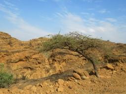 Unterwegs von den Massai zur Serengeti