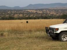 Neben dem Camp grast ein Büffel