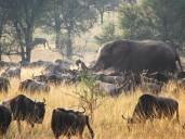 Auch eine Elefantenherde ist unterwegs