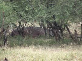 Im Vorbei-fahren erkennt Faraja in diesem Felsen ein Flusspferd