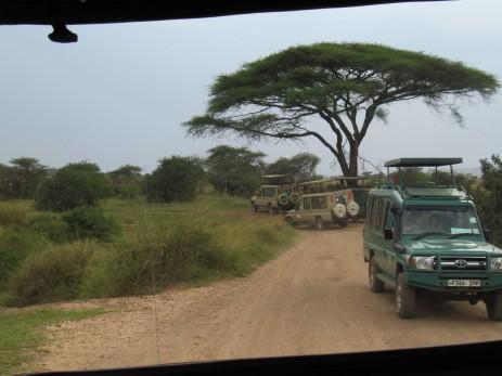 In der Zentral-Serengeti - auch Seronera genannt - treffen wir oft auf andere Jeeps