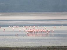 Auch Flamingos gibts im Krater