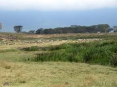 Neben dem Pool stehen auch einige Zebras
