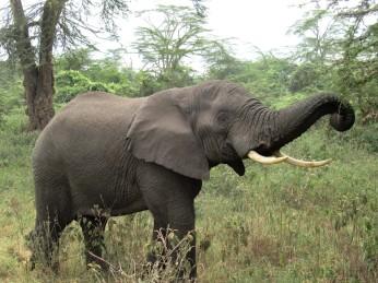 Die berühmten Safari-Touri-Worte: Der war ganz nah!